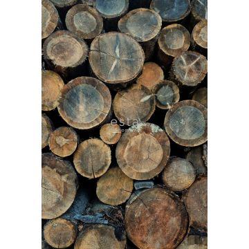 fototapet træstammer brunt