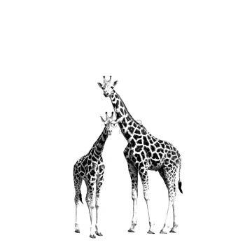 fototapet giraffer sort og hvidt