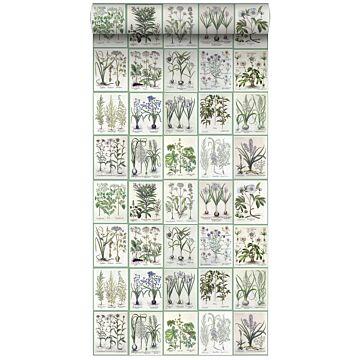 tapet XXL sider fra en botanisk bog varmt lysegråt og grønt