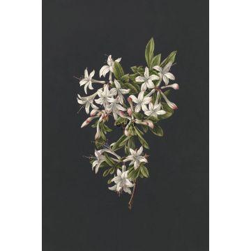 fototapet blomstring lyserosa og sort