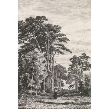 fototapet trælandskab sort og hvidt