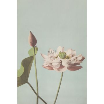 fototapet lotusblomst antikrosa