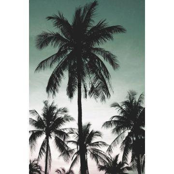 fototapet palmetræer benzingrønt