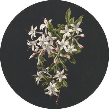 selvklæbende fototapet rundt blomstring lyserosa og sort