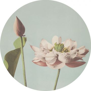 selvklæbende fototapet rundt lotusblomst skinnende lyserødt og gråblåt