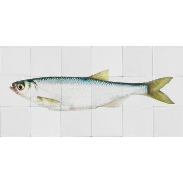 wallsticker fisk gul og blåt